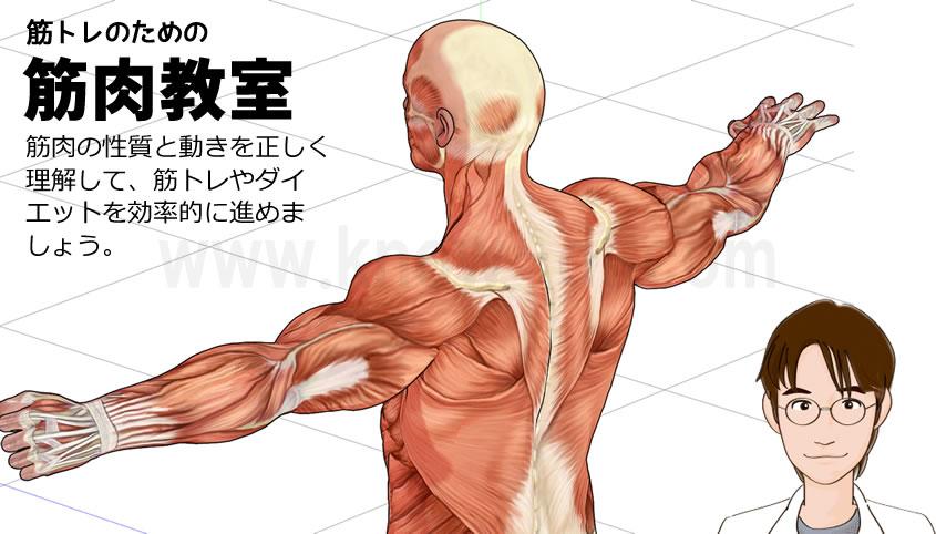 筋トレのための筋肉教室