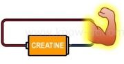 クレアチンの効果