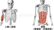 腹筋運動は毎日やってもOK?