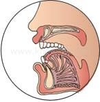 歯並びと筋力の関係