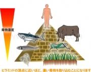肉体改造と環境汚染の関係