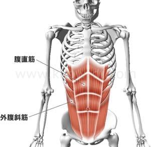 腹斜筋 に対する画像結果