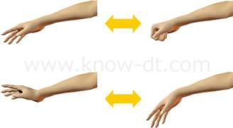 前腕筋のはたらき