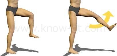 大腿四頭筋のはたらき