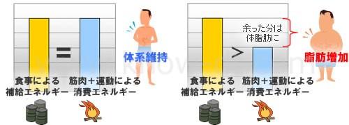 エネルギーと体脂肪の関係