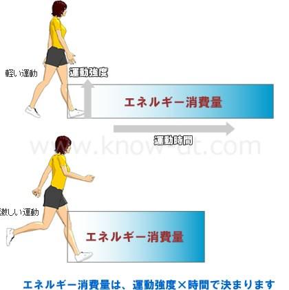 エネルギー消費量は、運動強度×時間で決まります