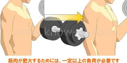 筋肉が肥大するためには、一定以上の負荷が必要です